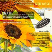 Girasol infografía