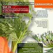 Zanahoria infografía