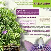 Propiedades y beneficios de la pasiflora infografía