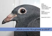 Nachzucht - 2013 - Ringloser x 215 - Titelbild