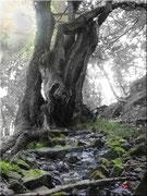 Der Baum des Lebens (s/w)