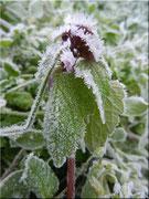 Der erste Frost 3