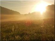Der Nebel des Morgens