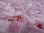 Das Blütenmeer