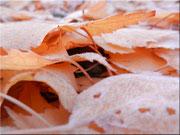 Der erste Frost 5