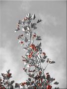 Schwarz-Weiß koloriert 03