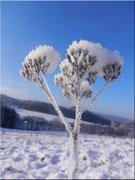 Die Schneeblume 1