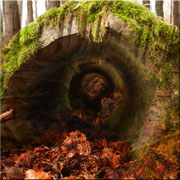 Der Tunnelblick