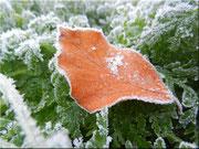 Der erste Frost 2