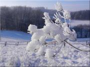 Die Schneeblume 3