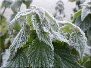 Der erste Frost 1