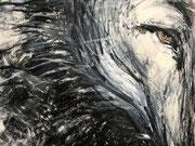 Wolf - Gesicht . Detail