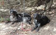 unsere beiden Wachhunde