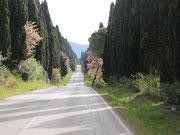 rund 5 km langen Zypressenallee