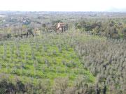 Vom Museumsturm aus auf die Hügel um Vinci