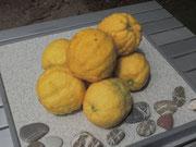 die geschenkten Zitronen