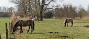 ...sorgen für schonende und natürliche Landschaftspflege