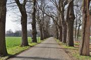 Die Allee zur Abtei Lilbosch