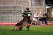 Bundessiegerzuchtschau 2013