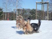 Schneetoben im Park
