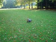 Knopf auf der Herbstwiese
