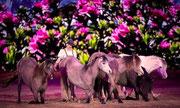Equitana 2013 - Kerstin Brein