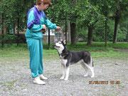 Сибирский хаски Асай и хэндлер Громова Оксана