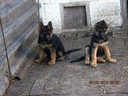 Кимберли (слева) и Кантри (справа), 2 мес