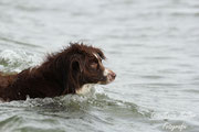 """...und war sogar schwimmen mein """"wasserscheuer"""" Hund :)"""