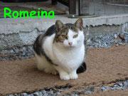 Romeina