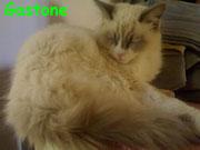 Gastone ci ha lasciati il 14 febbraio 2013