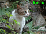 Betta ci ha lasciati il 27 novembre 2012