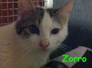 Zorro ci ha lasciati il 30 luglio 2013