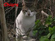 Chiara ci ha lasciati il 10 agosto 2012