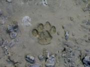 Impronta mininica