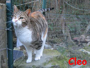 Cleo ci ha lasciati il 15 marzo 2013