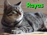 Rayas ci ha lasciati il 14 maggio 2012