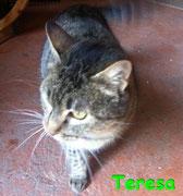 Teresa ci ha lasciati il 23 maggio 2013