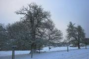 La même sous la neige