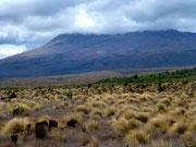 Parc national de Tongariro - Le Ruapehu