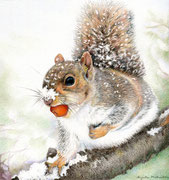 Eichhörnchen im Winter - Farbstifte - 2016  (Referenzphoto von Karen Riston)