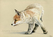 """Attentive Fox"", colored pencil, (reference photo by Ashi)"