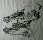 Tiergebiss, Bleistiftzeichnung