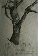 Nussbaum bei Gars, Bleistiftzeichnung