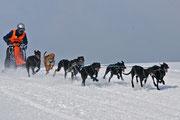 Hundeschlittenrennen in Sandl