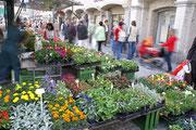 Buntes Treiben am Wochenmarkt