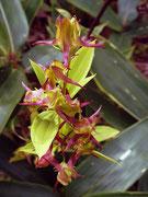 ハナイカリ 2008.09.28