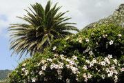 Die farbenfrohe Blüte der Küstensraße...