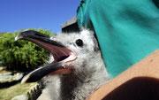 Besuch bei SANCCOB. Hier werden verletzte Seevögel aufgenommen und geheilt.