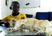Traurig: dieser Junge muß Abschied nehmen. Die fleißigen Ärzte der Klinik konnten senem Hund nicht mehr helfen.
